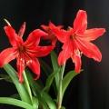 我的花儿----自养自拍的花