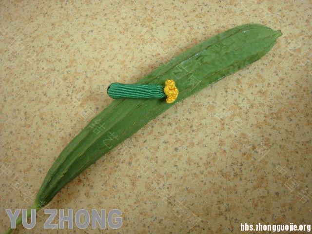 中国结论坛 蔬果集 (2012-02-28更新)  立体绳结教程与交流区 134607jw9r6fqsnxxesu49