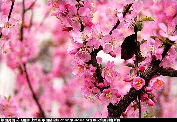 中国结论坛   立体绳结教程与交流区 161617r36dv626nd5n1r80
