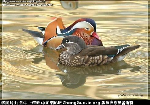 中国结论坛   立体绳结教程与交流区 182731aulu444aug4bmy4t