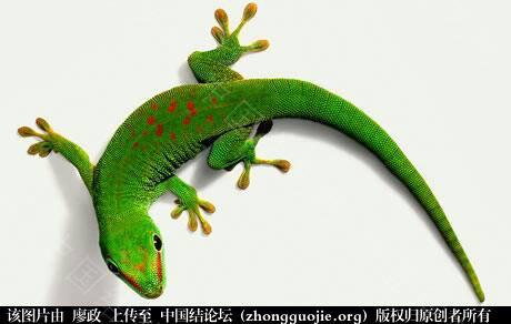 中国结论坛 绿壁虎  立体绳结教程与交流区 000847wthpgcvhshmntpt5