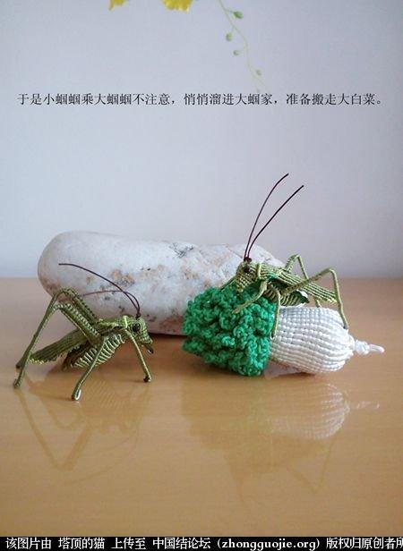 中国结论坛 两个蝈蝈的故事 故事 立体绳结教程与交流区 190637ufcnftycefzct7na