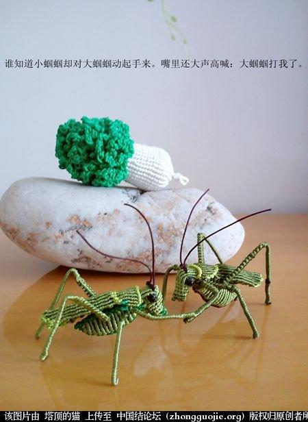 中国结论坛 两个蝈蝈的故事 故事 立体绳结教程与交流区 190811z3v3a725n0n7kzjr