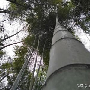 竹编路,一个人走了1235天后,对竹编的5点感悟!