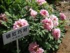 春日牡丹园