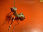 学编的蚂蚁