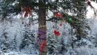 山顶上的圣诞树