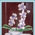 蝶舞枫扬——花卉