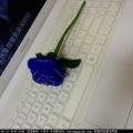 莲花,玫瑰花