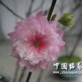 自家種的花