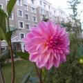 我的相册6(我拍的花)