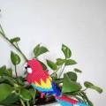 红色金刚鹦鹉