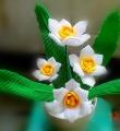 【玉台金盏】水仙盆栽