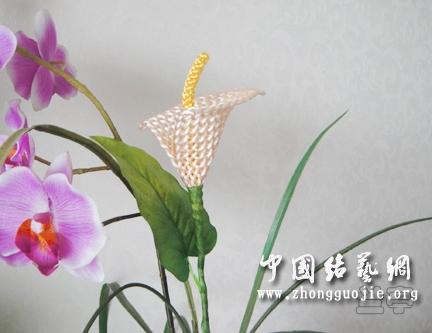 中国结论坛 马蹄莲  兰亭结艺 0857199qkfjhhmh8z9makt