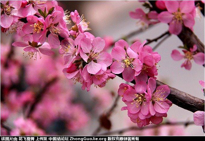中国结论坛   立体绳结教程与交流区 16162175hh2zcuuu1xu1v9