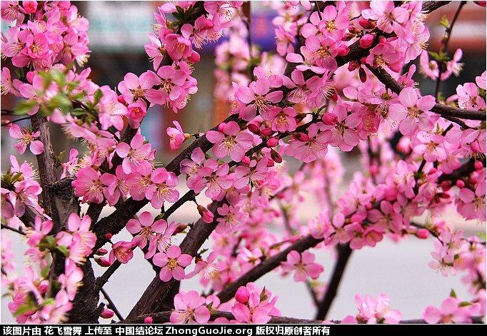 中国结论坛   立体绳结教程与交流区 161627ij8snks4s6sssssk