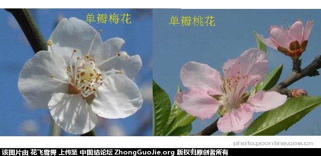 中国结论坛   立体绳结教程与交流区 161643wt9ttw5sawzfqgs9