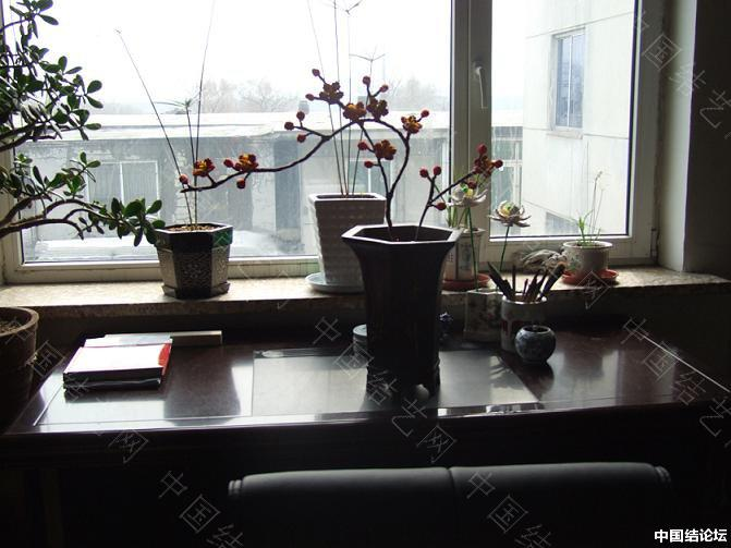 中国结论坛 红梅报春 报春,红梅 作品展示 12472485yaaaabz18ymbyb