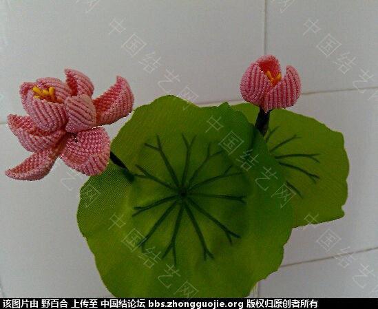 中国结论坛 在论坛学习了几种花(增加一款风信子) 论坛,学习,学习了,了几,种花 作品展示 11531391y1y4zyez2qty3y