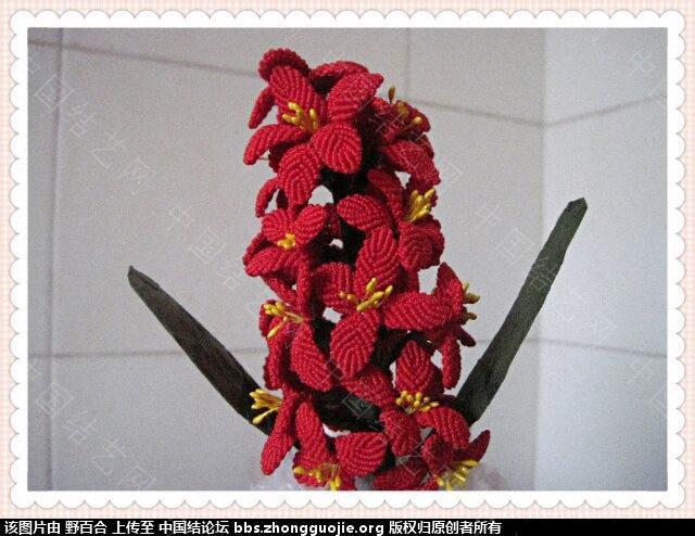 中国结论坛 在论坛学习了几种花(增加一款风信子) 论坛,学习,学习了,了几,种花 作品展示 093059lgavgozxv5onjx5a
