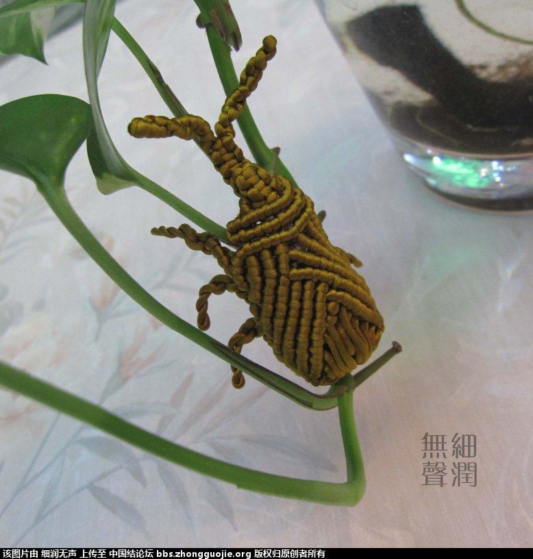 中国结论坛 编了只金色甲虫  作品展示 154352jnbvr8njrton8bpo