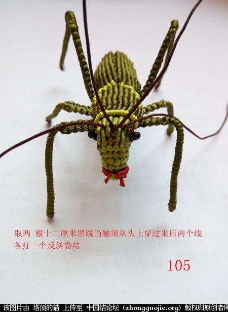 中国结论坛 蝈蝈的编法  立体绳结教程与交流区 162257vxplhbkr8kp2cbbv