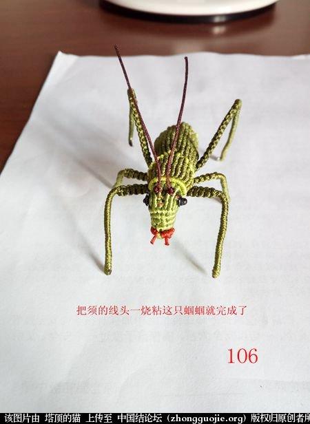 中国结论坛 蝈蝈的编法  立体绳结教程与交流区 162321f1u0yff901y71plp
