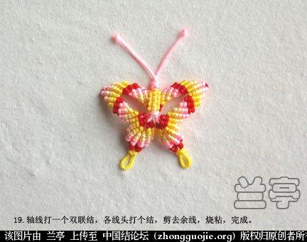 中国结论坛 蝴蝶(中级) 蝴蝶 兰亭结艺 134251uxm3oxre3ismn746