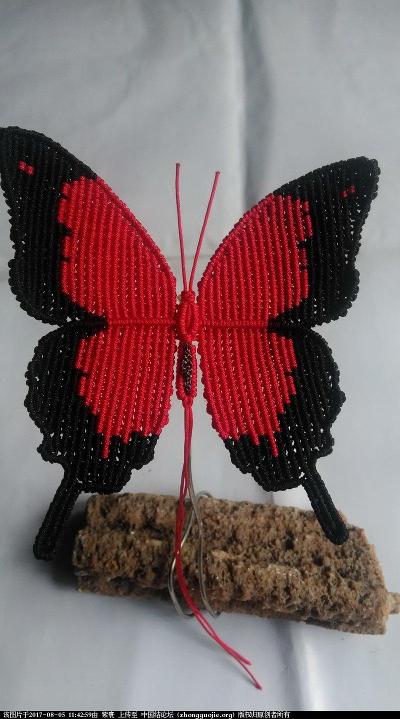 中国结论坛 我的鳳蝶  作品展示 114145xw4rdi1nunv1r16m