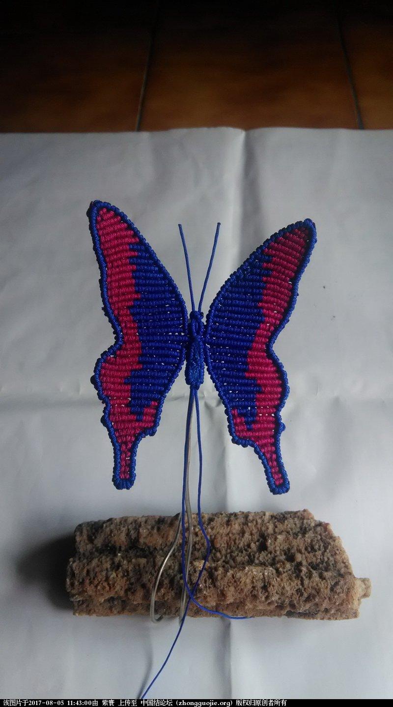 中国结论坛 我的鳳蝶  作品展示 114229ukwk00wmn355m80k