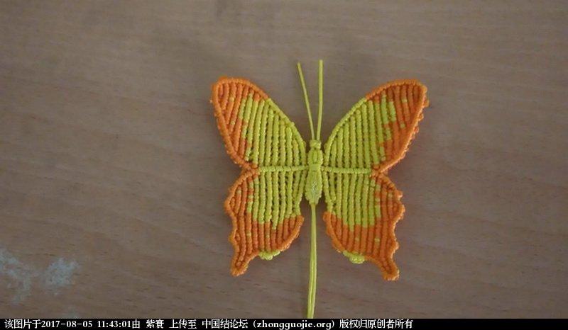 中国结论坛 我的鳳蝶  作品展示 114243ull7ar7q5qdla33l