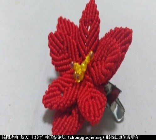 中国结论坛 圣诞花一品红胸针编绳教程 科科手工录制 教程,一品红吧,一品红的花朵是什么,一品红怎么繁殖,一品红什么季节开花 视频教程区 221115dbsa5zfg7gd7spbu