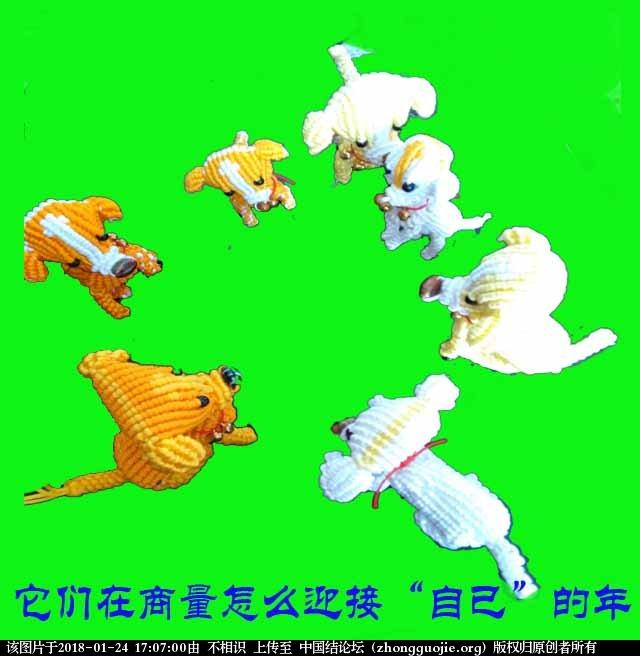 中国结论坛 狗 狗狗品种大全,泰迪我下面了,狗狗图片大全,各种狗狗图片 立体绳结教程与交流区 170231y5l5wlahva9vu9ac