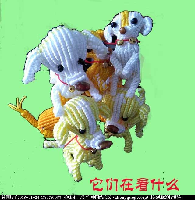 中国结论坛 狗 狗狗品种大全,泰迪我下面了,狗狗图片大全,各种狗狗图片 立体绳结教程与交流区 170244mab8cbsobz8mm99z