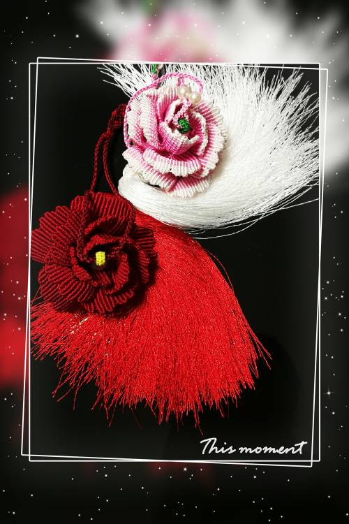 中国结论坛 牡丹——最美不过花开时  作品展示 210546wr167y9e969qq6t3