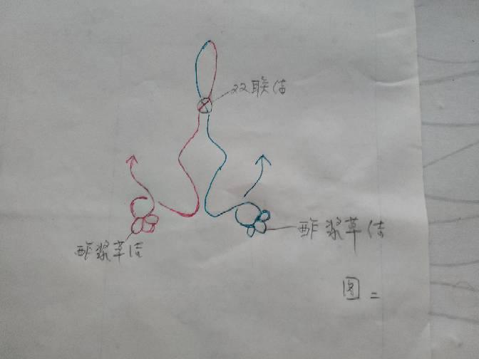 中国结论坛 万字双攀缘蝴蝶  图文教程区 185654cxvom6xkkxmm31xw