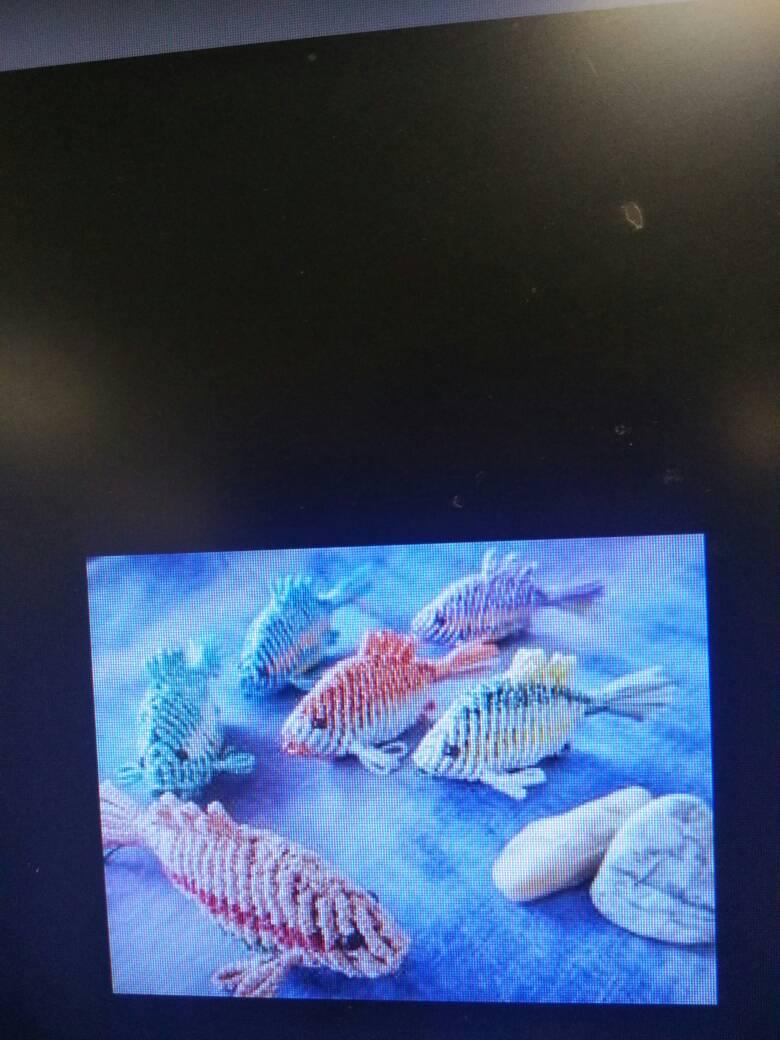 中国结论坛 有没有这个鱼的教程,好喜欢  结艺互助区 224711ed33dd8x8znpn0x4