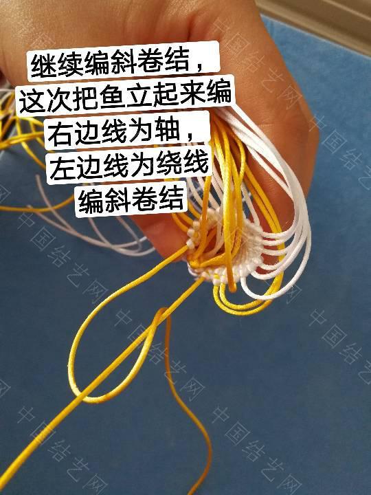 中国结论坛 鱼教程  立体绳结教程与交流区 222321m8p98z7ox8nci55a