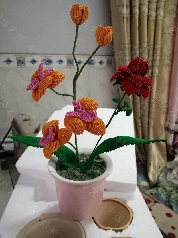 中国结论坛 我的花花世界  作品展示 200221hiskxzynxy8tsysk