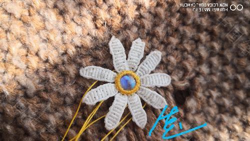 中国结论坛 我的小雏菊一枚 我的,小雏菊,一枚,小雏菊的花语是什么,小雏菊代表什么意思 作品展示 155048bfxw37j5b1jf3i75
