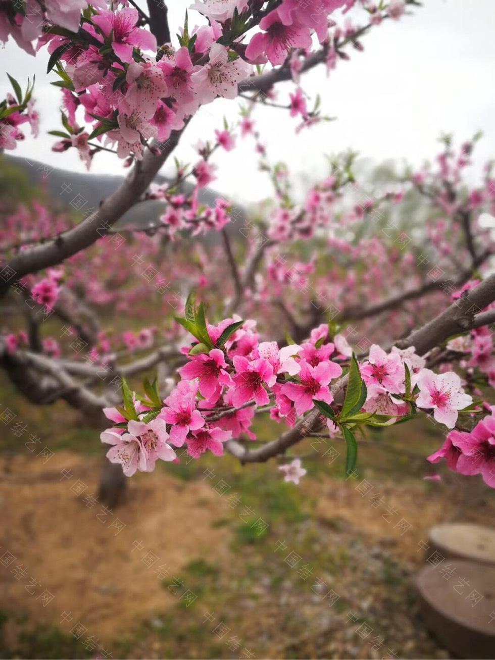 中国结论坛 春日出游 春日,日出,出游,形容春日出游的古诗,游玩的诗句朋友圈 作品展示 191056n7q9kxudgo898gta