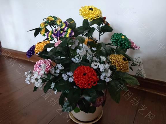 中国结论坛 菊花 菊花,菊花是什么意思了,菊花的功效与作用,菊花是什么器官,菊花种类大全 作品展示 185506nlcn36illzc1i2c4
