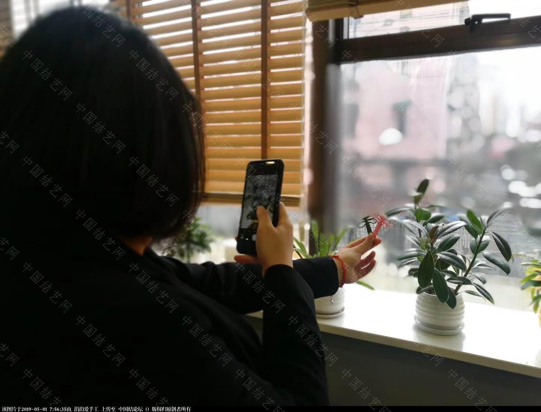 中国结论坛 年轻朝气的大学生们,来自各国,齐聚上海青编舍学习中国传统文化·中国结 年轻,朝气,大学,大学生,学生 结艺网各地联谊会 075038m9220p64q44o6teo