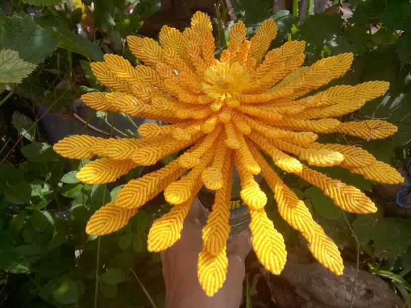 中国结论坛 菊花 菊花,菊花是什么意思了,菊花是什么器官,菊花的功效与作用,菊花茶的功效与作用 作品展示 143602um4i0m9itmsf4t4d