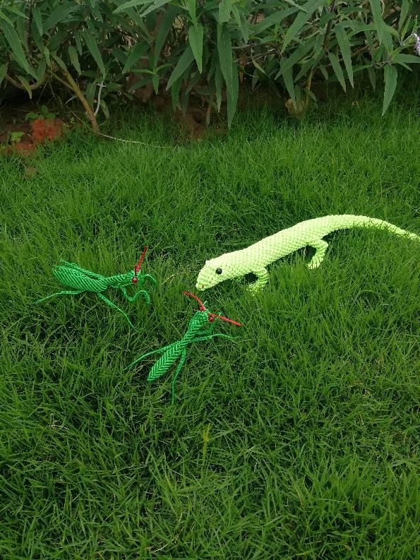 中国结论坛 蜥蜴  作品展示 045740ubiymq55vmp75x1l