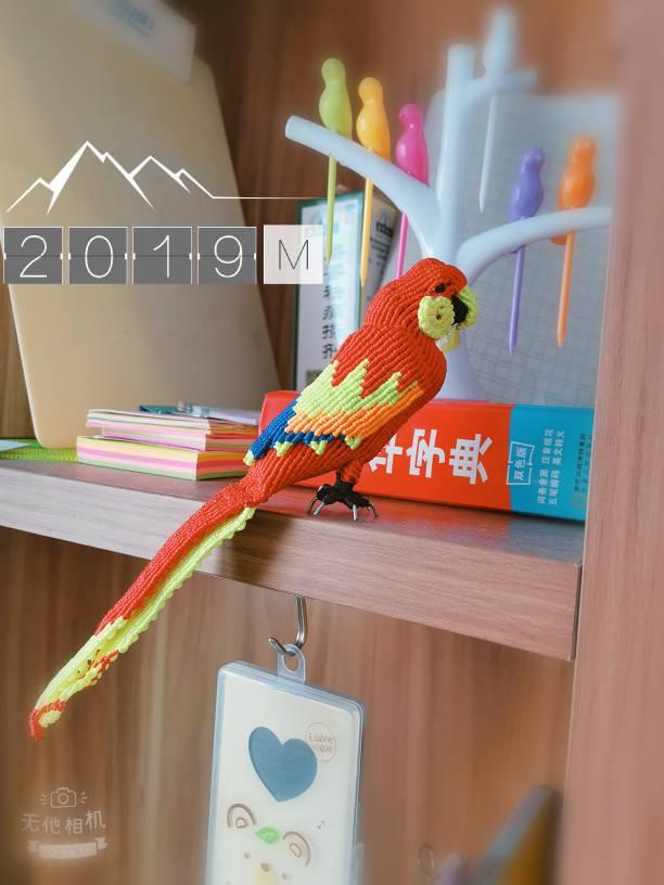 中国结论坛 鹦鹉 鹦鹉,养鹦鹉的人一定要小心,玄凤鹦鹉,十大名贵鹦鹉,养鹦鹉的禁忌 作品展示 155316gqdjysruavvrvvb8