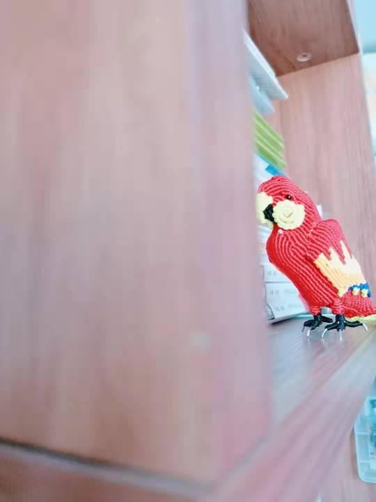 中国结论坛 鹦鹉 鹦鹉,养鹦鹉的人一定要小心,玄凤鹦鹉,十大名贵鹦鹉,养鹦鹉的禁忌 作品展示 155317x0hifnphmpp7k7f4