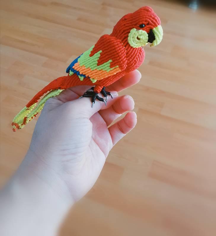 中国结论坛 鹦鹉 鹦鹉,养鹦鹉的人一定要小心,玄凤鹦鹉,十大名贵鹦鹉,养鹦鹉的禁忌 作品展示 155318jpn7nkhuq4xqh444