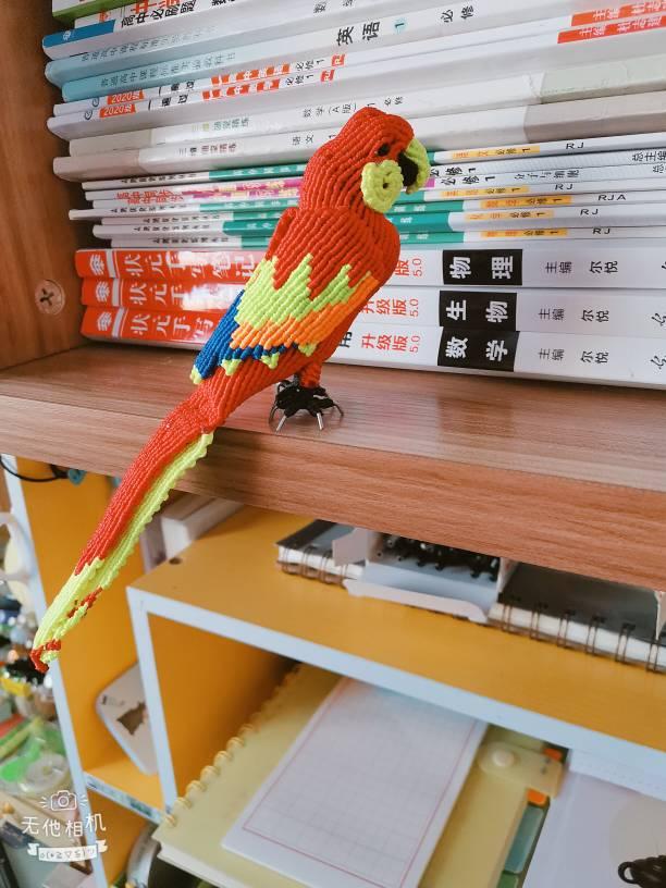 中国结论坛 鹦鹉 鹦鹉,养鹦鹉的人一定要小心,玄凤鹦鹉,十大名贵鹦鹉,养鹦鹉的禁忌 作品展示 155319hyajjienfdtddxqz