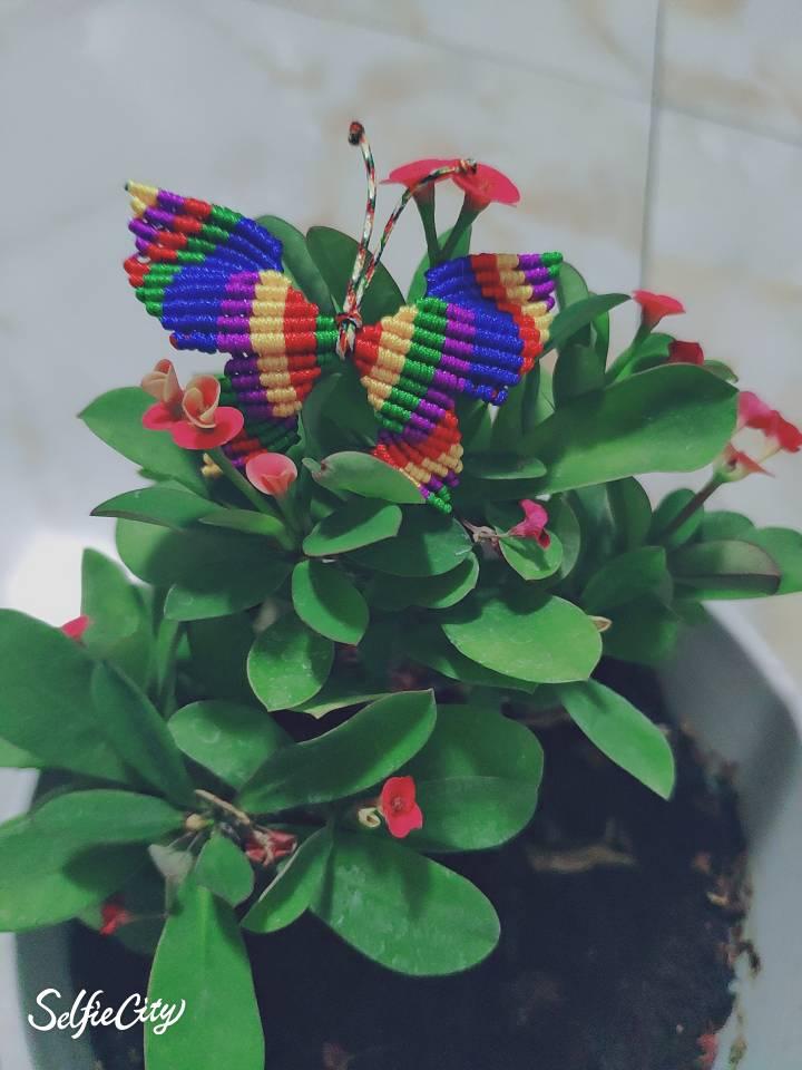 中国结论坛 送给孩子的小蝴蝶,希望她喜欢 送给,孩子,小蝴蝶,蝴蝶,希望 作品展示 014950bkikaliisuiwqscc